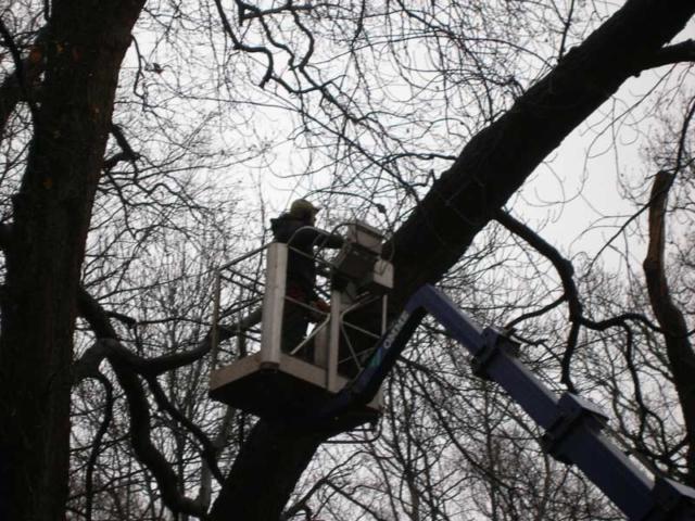 snoeien-bomen-hoogwerker-hovenier-castricum-heiloo
